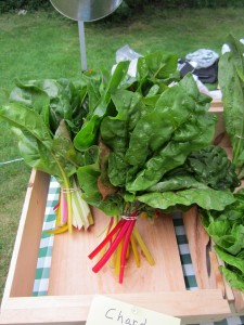 pretty rainbow chard