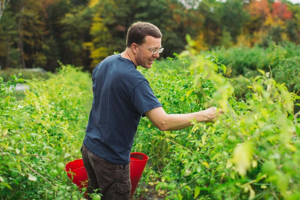 Pat picking tomatillos