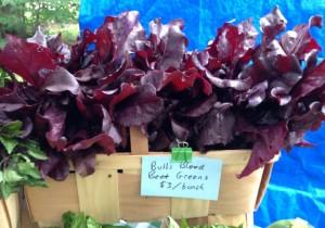 Bull's Blood Beet Greens